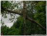 Fronleichnam200907