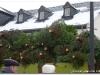 Weihnachtsbaumverkauf-2010-0016.jpg