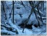winterwanderung200904.jpg